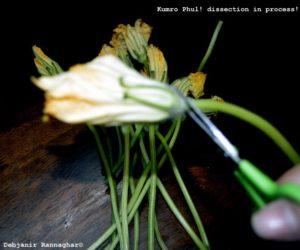 %Kumro Phul or Pumpkin Flower