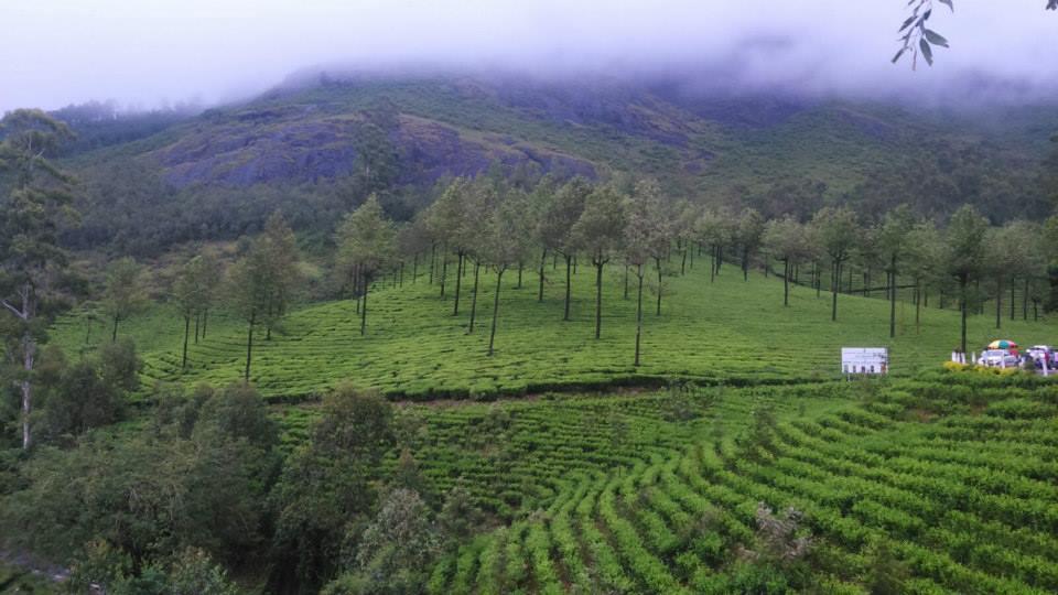 Munnar Trip